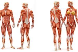 apparato-muscolare